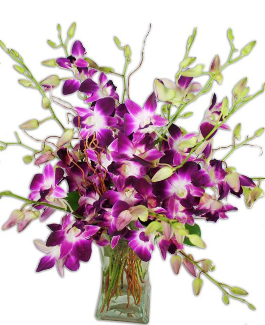 Shade of purple orchids and vase may vary slightly Purple orchids have been